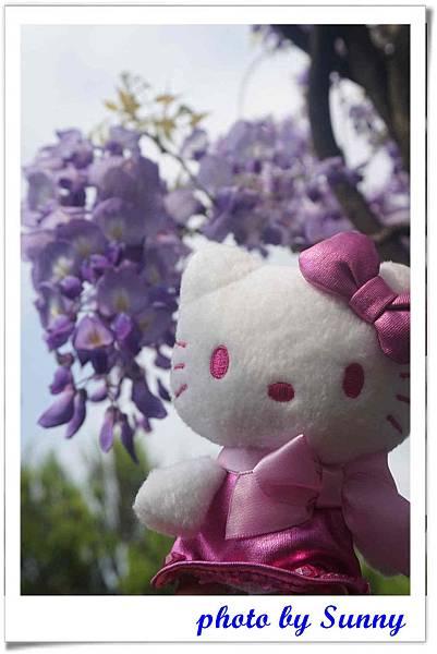 淡水紫藤園4.jpg