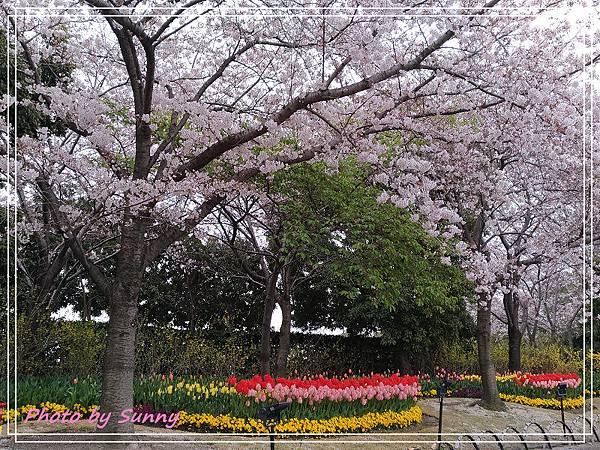 名古屋賞櫻3.jpg