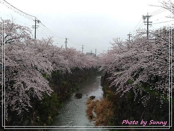 名古屋賞櫻5.jpg