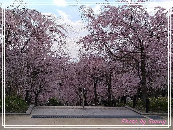 名古屋賞櫻4.jpg