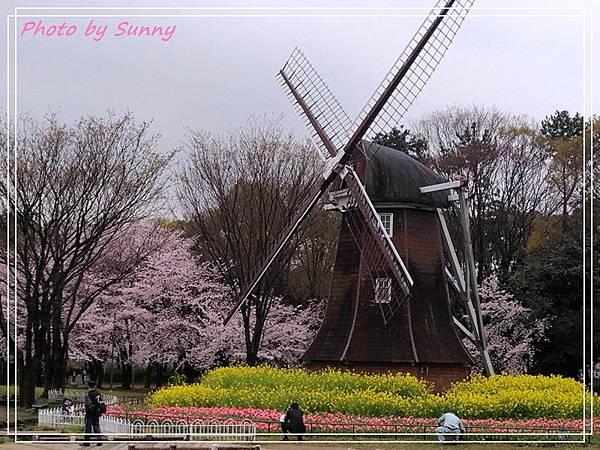 名古屋賞櫻6.jpg