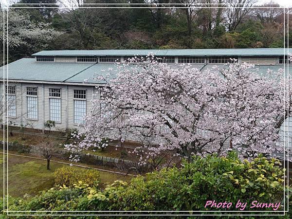 名古屋賞櫻9.jpg