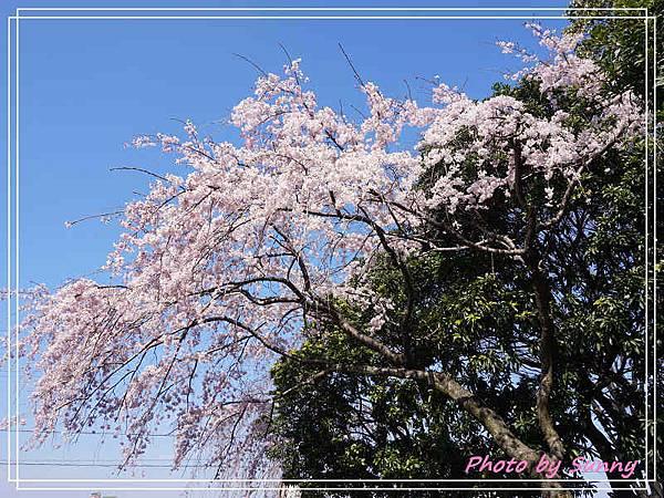 庄內綠地公園2.jpg
