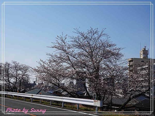 庄內綠地公園4.jpg