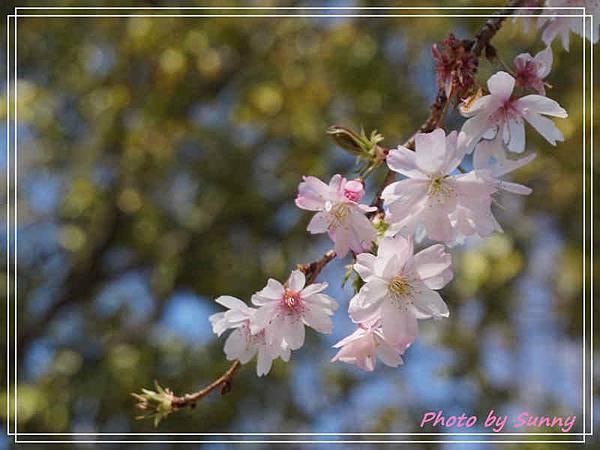 庄內綠地公園8.jpg