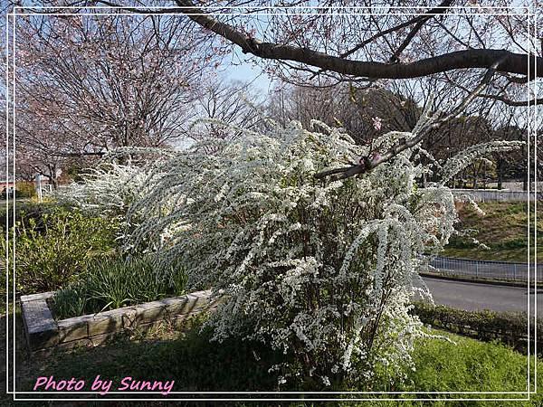 庄內綠地公園14.jpg