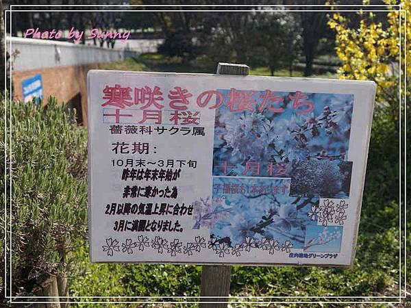 庄內綠地公園15.jpg