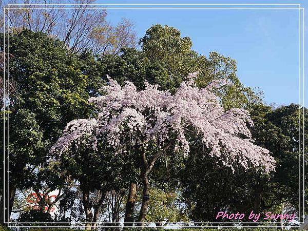 庄內綠地公園17.jpg