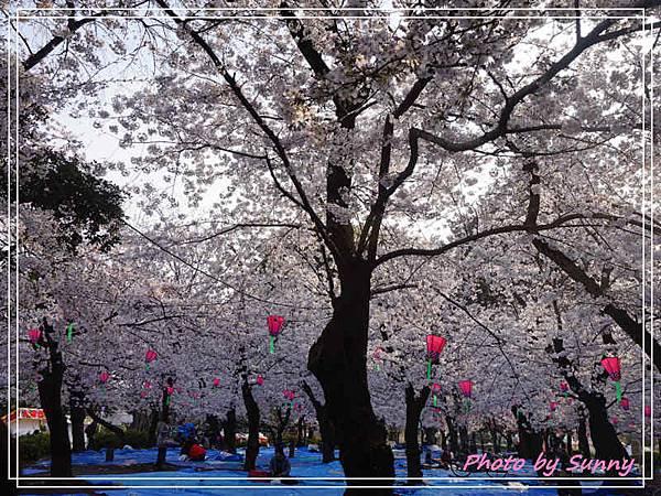 鶴舞公園5.jpg