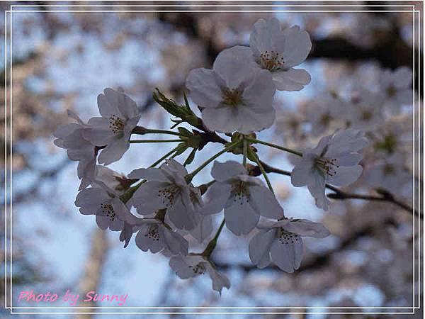 鶴舞公園6.jpg