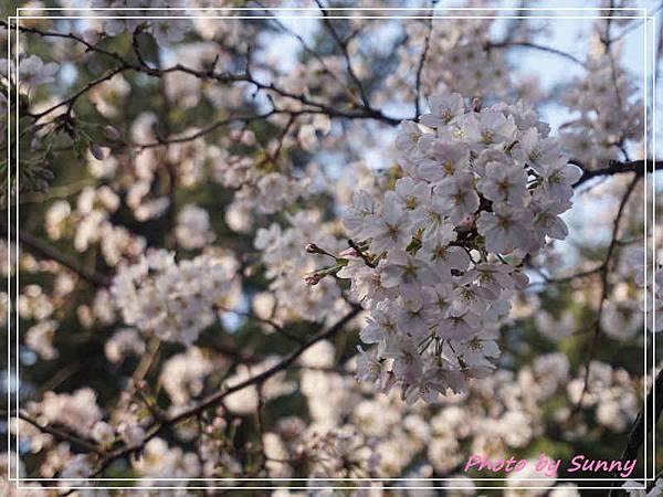 鶴舞公園8.jpg