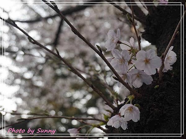 鶴舞公園10.jpg