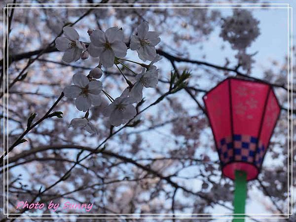 鶴舞公園11.jpg