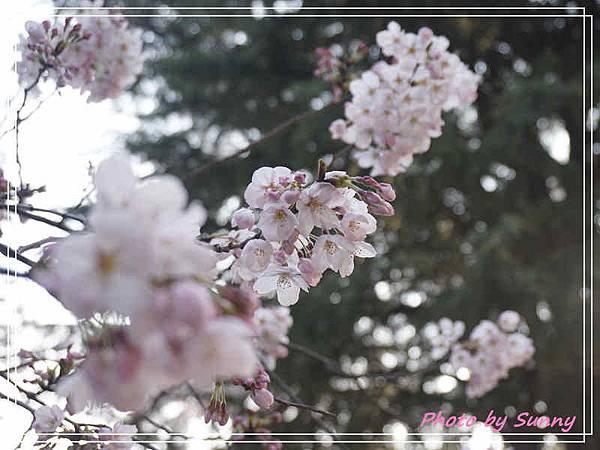 鶴舞公園12.jpg