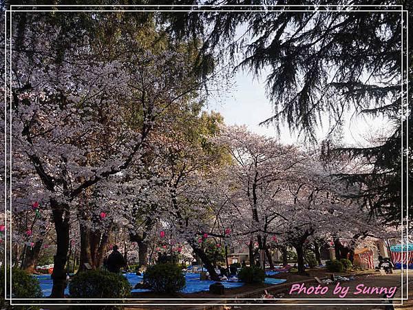 鶴舞公園13.jpg