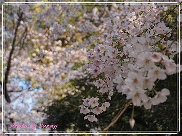 鶴舞公園14.jpg
