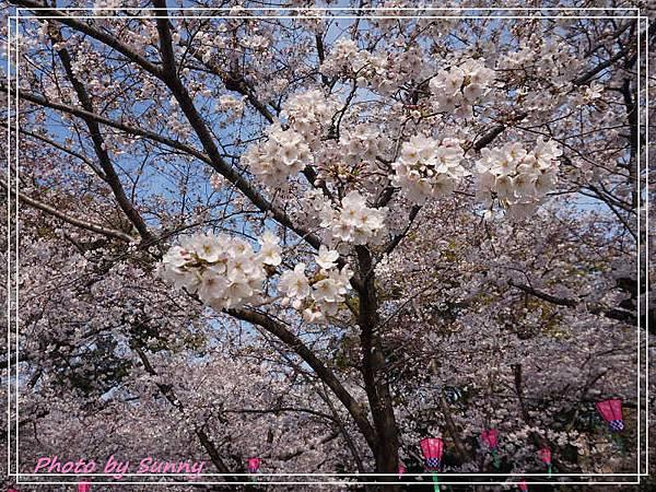 鶴舞公園28.jpg