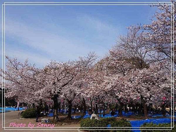 鶴舞公園30.jpg