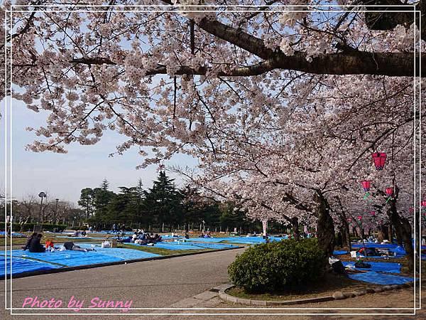 鶴舞公園31.jpg