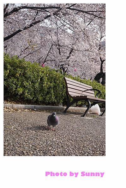 鶴舞公園36.jpg