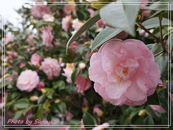名花之里3.jpg