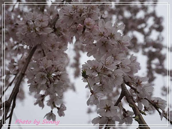 名花之里12.jpg
