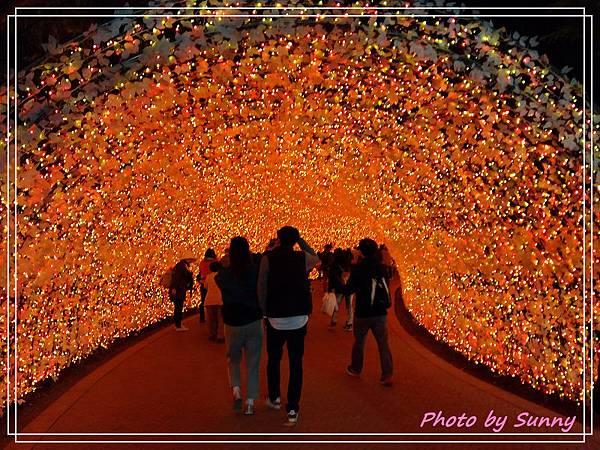 名花之里夜景12.jpg