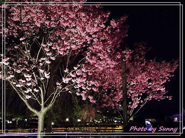 名花之里夜景15.jpg