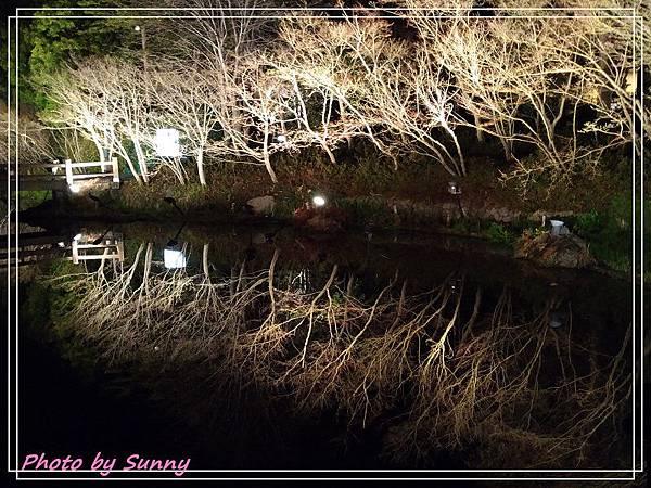 名花之里夜景17.jpg