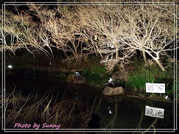 名花之里夜景18.jpg