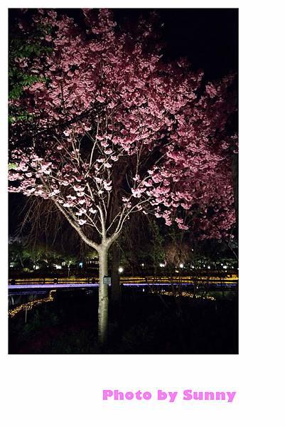 名花之里夜景32.jpg