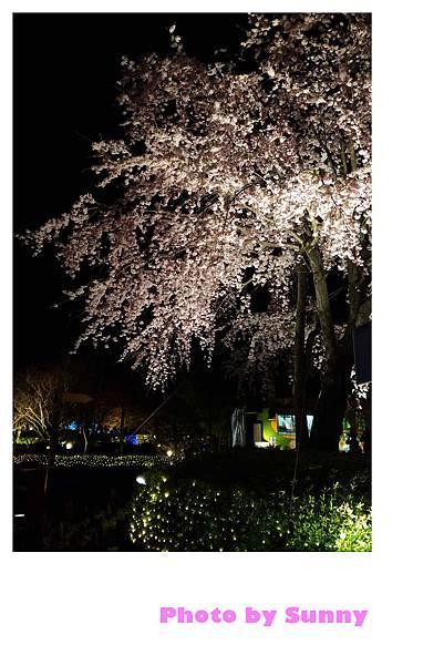 名花之里夜景34.jpg