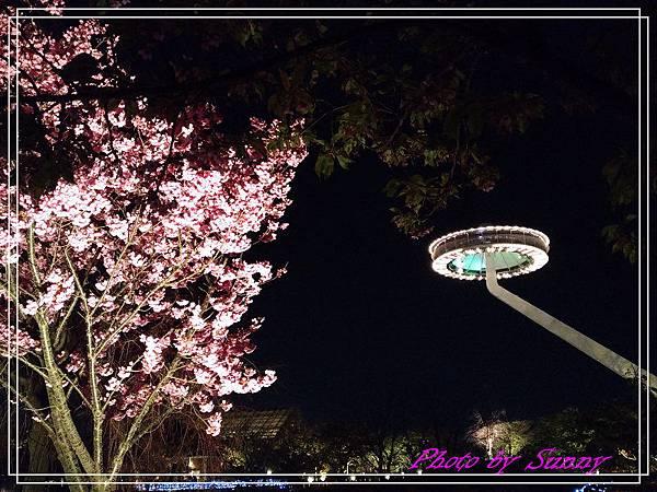 名花之里夜景35.jpg