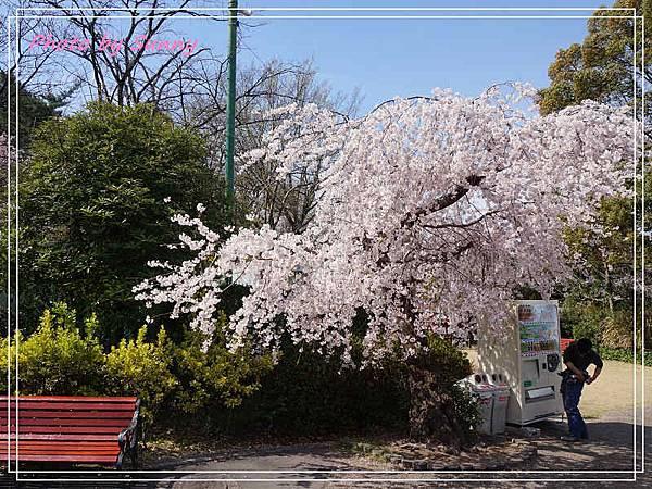 東山動植物園7.jpg