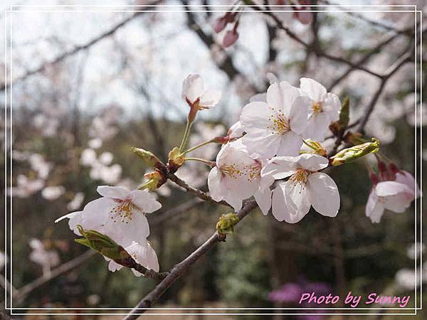 東山動植物園9.jpg