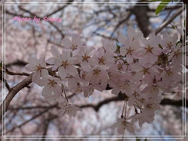 東山動植物園16.jpg