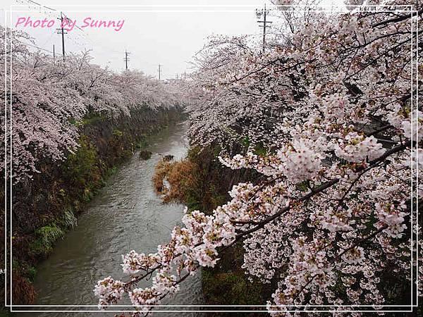 山崎川1.jpg