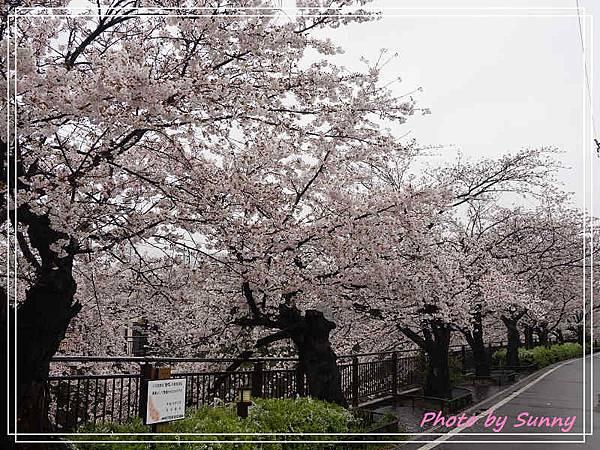 山崎川3.jpg