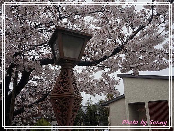 山崎川2.jpg