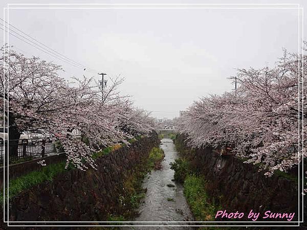 山崎川4.jpg