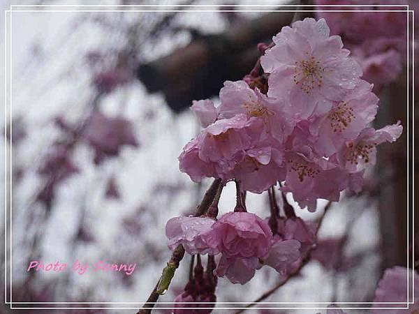 山崎川11.jpg