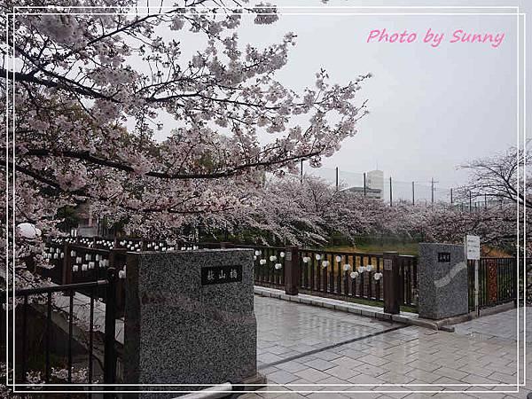 山崎川13.jpg