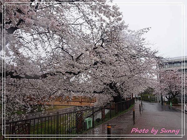 山崎川12.jpg