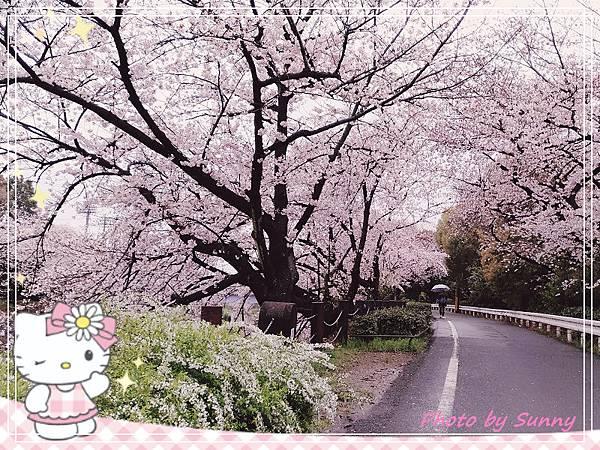 山崎川14.jpg