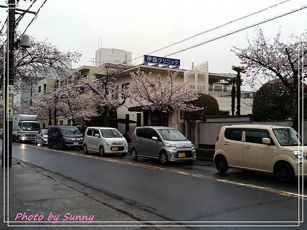 山崎川15.jpg