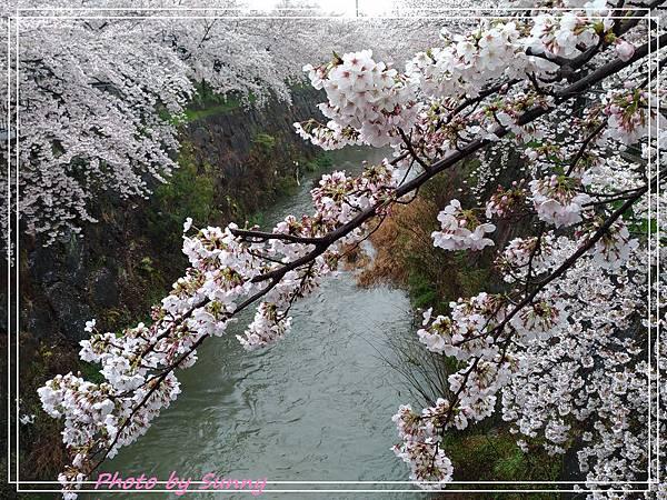 山崎川16.jpg