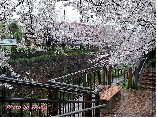 山崎川17.jpg
