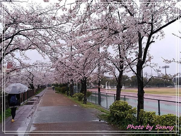 山崎川20.jpg