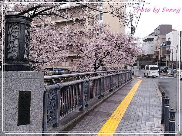 山崎川21.jpg
