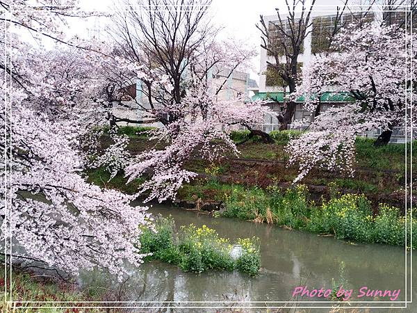 山崎川22.jpg